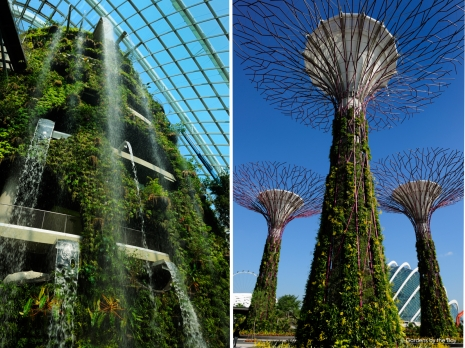 Cloud Forest and Supertrees