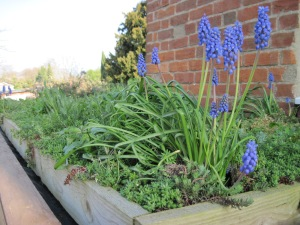 Image courtesy of Kay Davies, Oxford Green Roofs