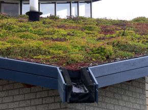 Green roofs tackle stormwater – Part I