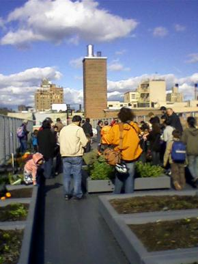 Roof top gardens as a food source